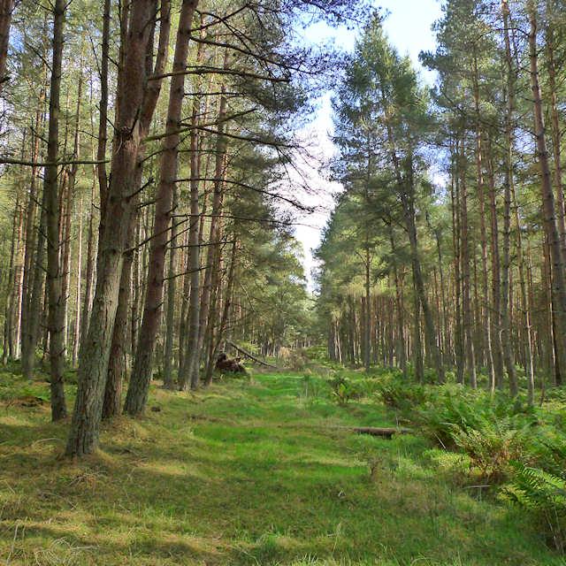 Eastern arm of Taymount Wood