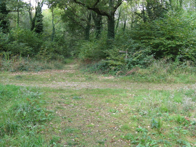 Cross roads of paths in Tottington Woods