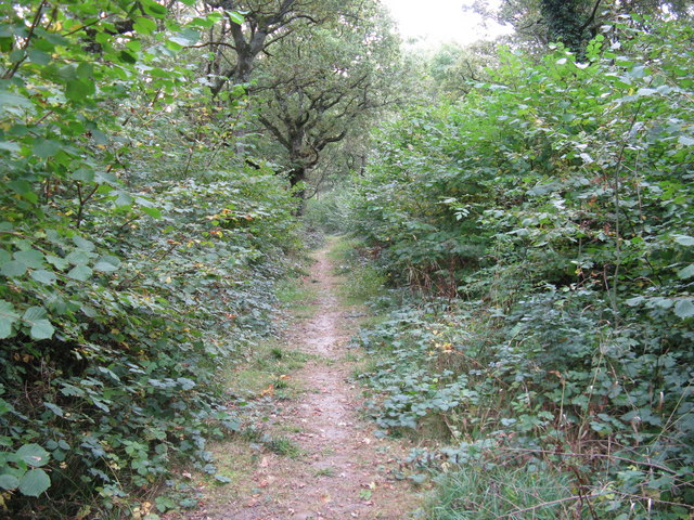 Looking east through Longlands Wood