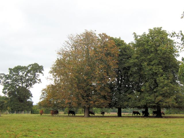 A circle of trees at Poulsden Lacey