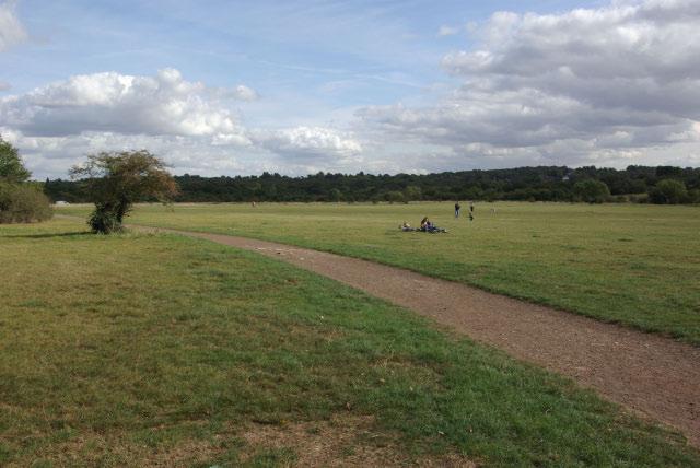 Chingford Plain