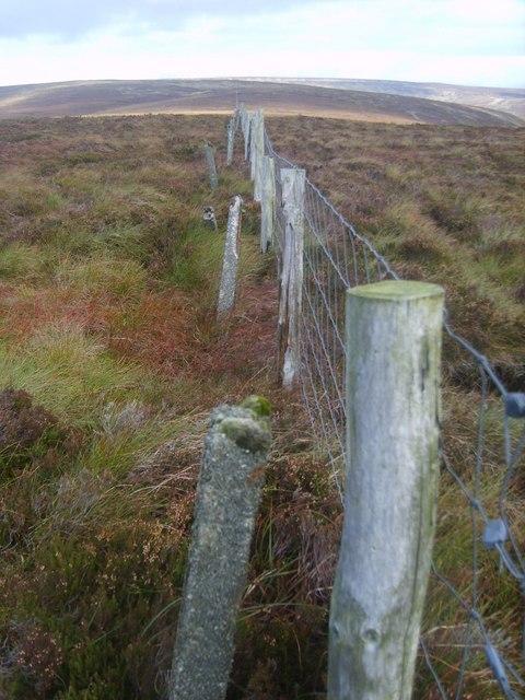 Fence, Procter Moss