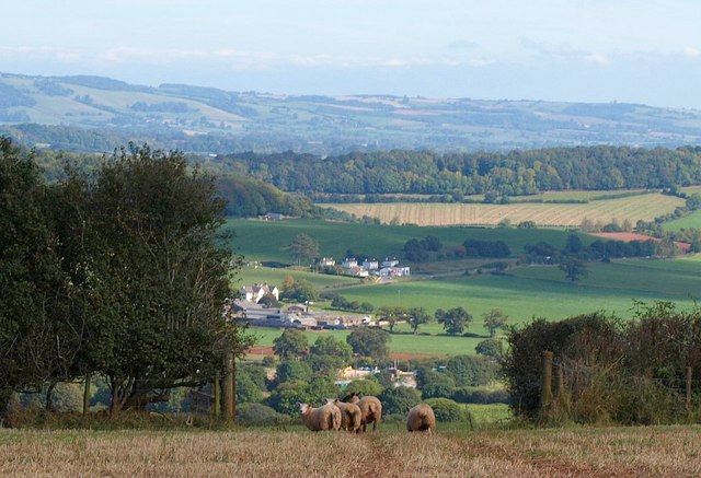 Sheep in gateway above Wiveliscombe
