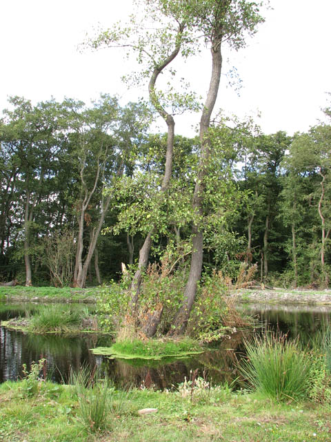 Small island in fishing lake