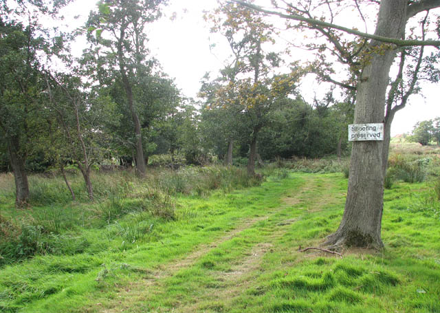 Woodland by Limpenhoe Lakes