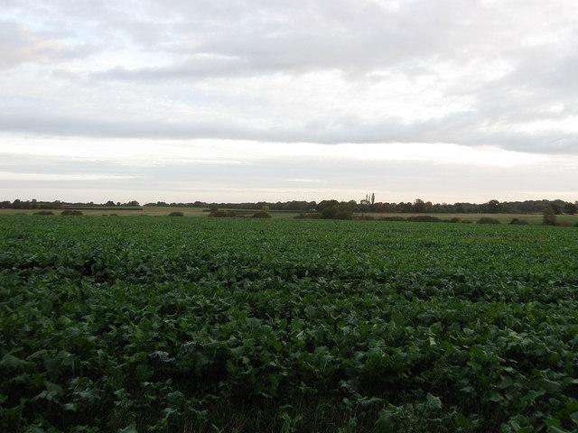 Thistley Field