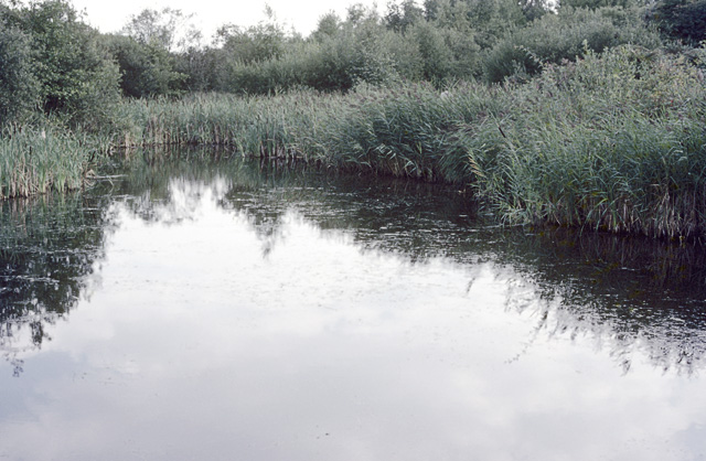 The Lake at Fingringhoe Wick nature reserve