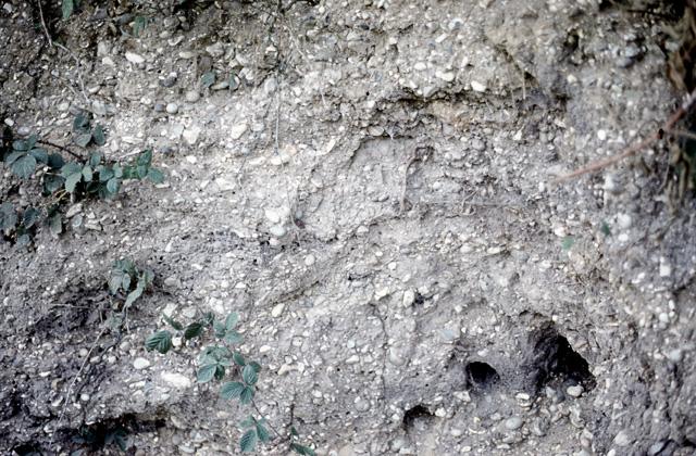 Pebble gravel, Fingringhoe Wick nature reserve