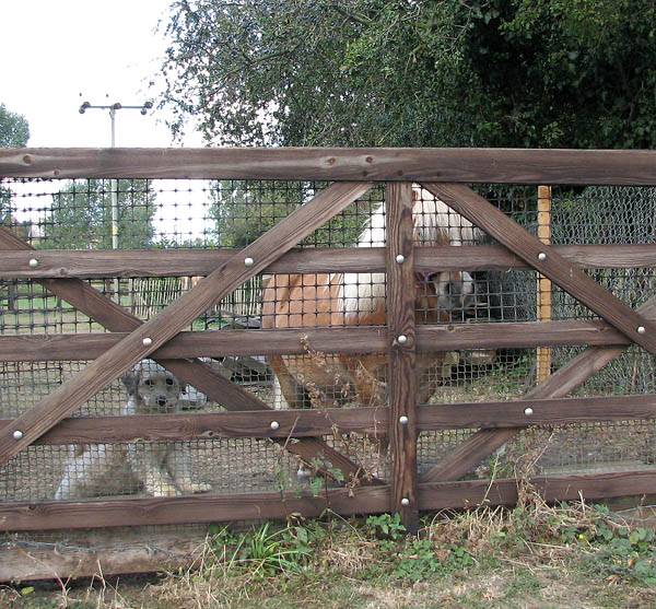 A well guarded gate