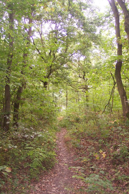 A footpath in Clowes Wood, near a Tumulus