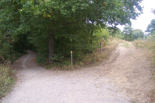Trackway junction in Clowes Wood