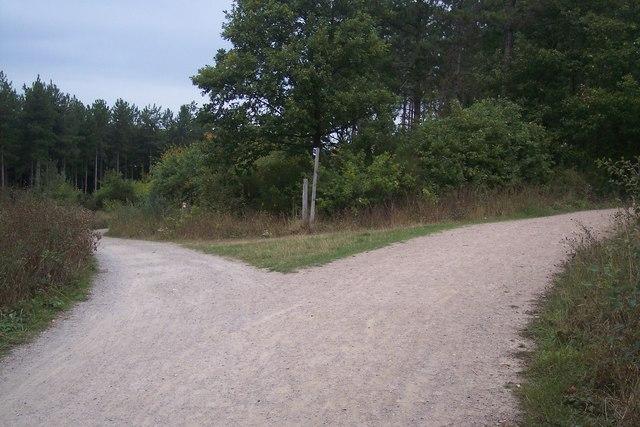 Trackway junction in Clowes Wood (2)