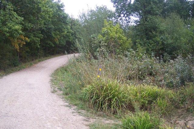 Footpath junction in Clowes Wood