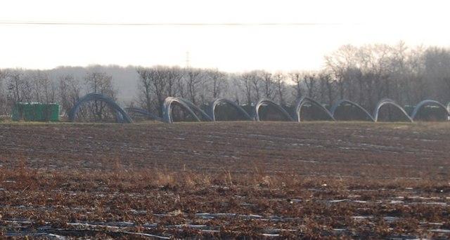 Plastic hoops in a fruit field, Broak Oak