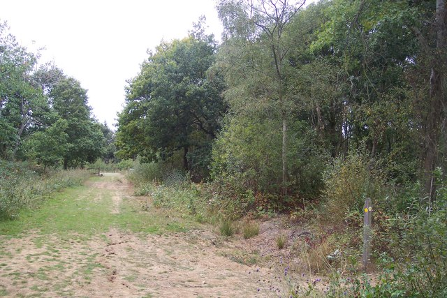 Footpath, access track and cycle path in Clowes Wood