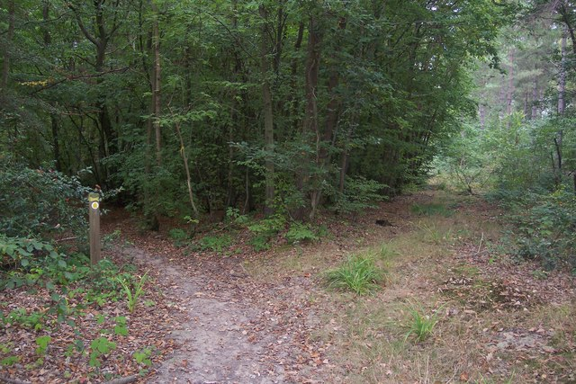 Footpath and disused access track in Clowes Wood