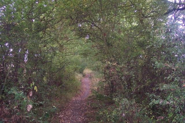 Footpath towards Walnut Tree Farm