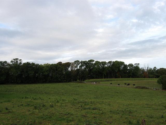 Chalk Field
