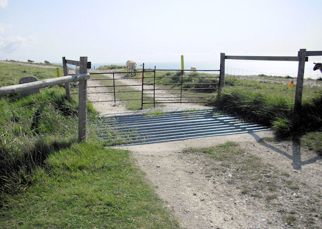 Cattle Grid, Bindon Hill