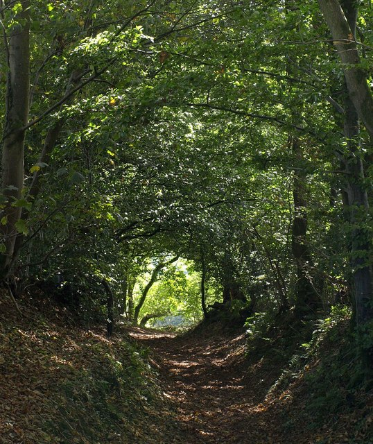 Summer Cleave Lane