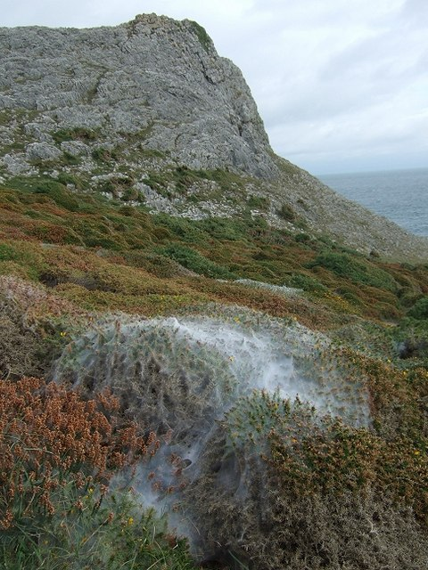 Misty Cobwebs over Heather