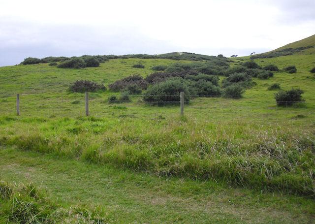 Above South West Coast Path, Mupe Bay