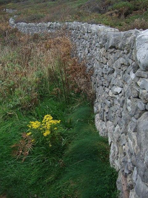 Yellow, Brick, Path.