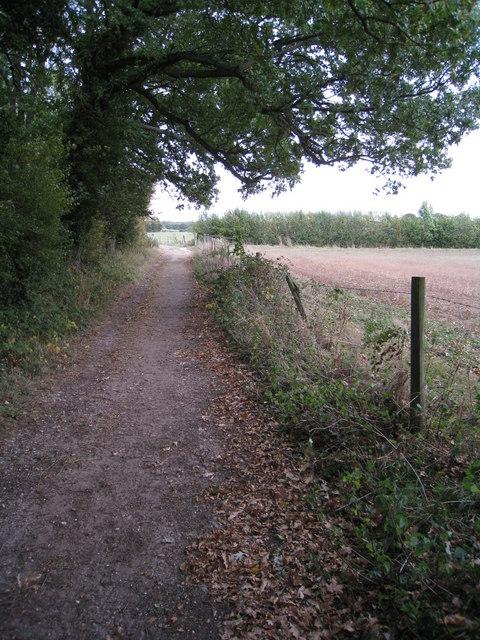 Track to Hodd's Farm