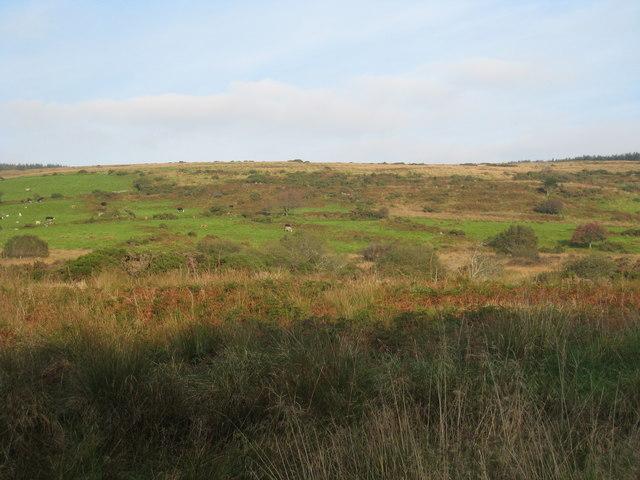Fields in the Fowey valley near Littleworth