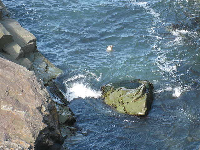 Seals in the inlet