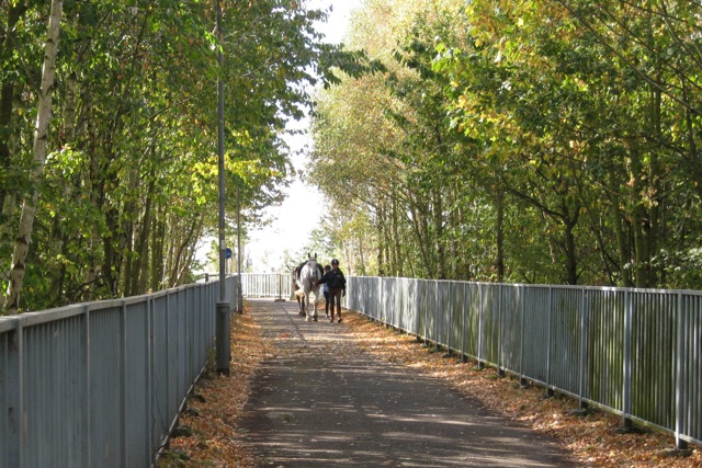 Horses and riders cross the M40 by junction 15