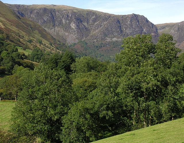 Trees in Cwm Cywarch