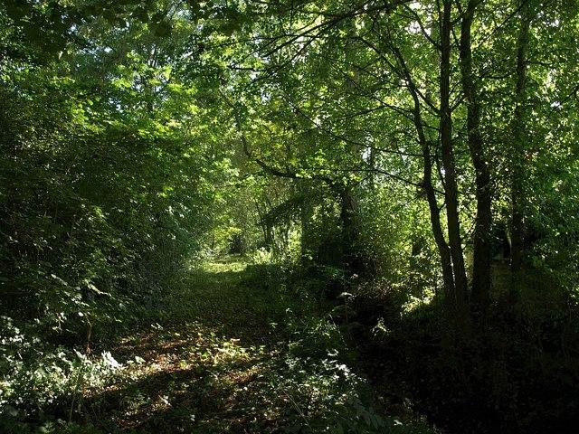 Footpath through Moor Plantation