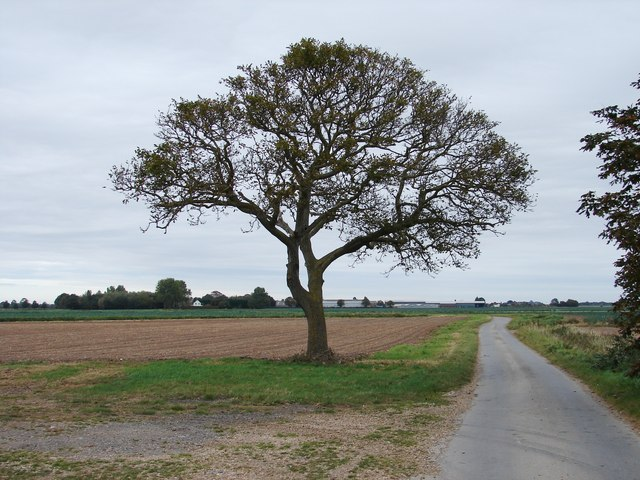 Tree on Spicer's Lane