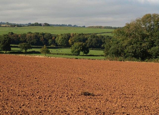 Countryside northeast of Bathealton