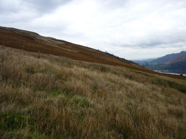Hillside above Derry Wood