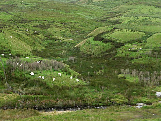 The valley of Nant Cwta, with sheep