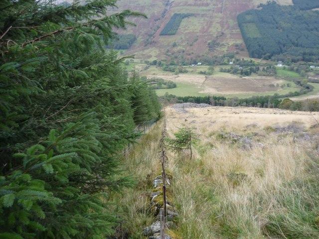 Forest edge above Balquhidder