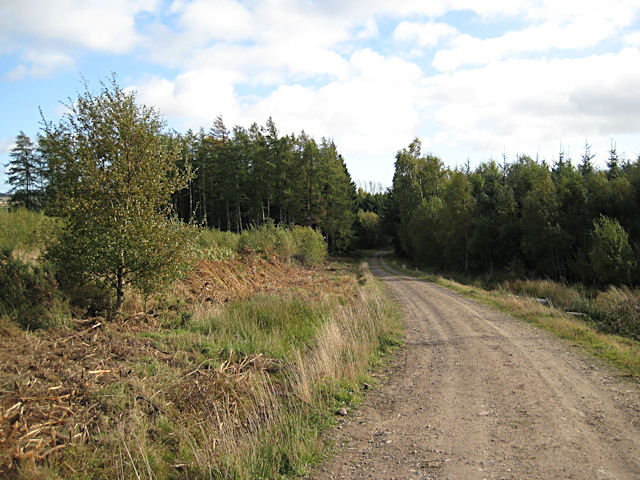 Track in Taymount Wood