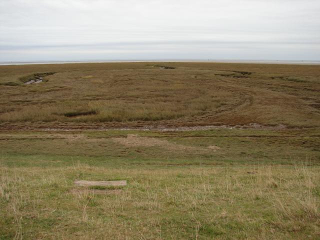 Salt marsh from the sea bank