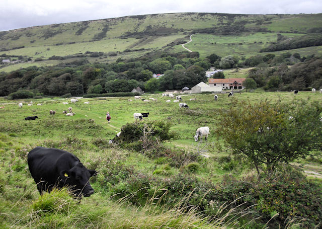 Tyneham Farm and Povington Hill
