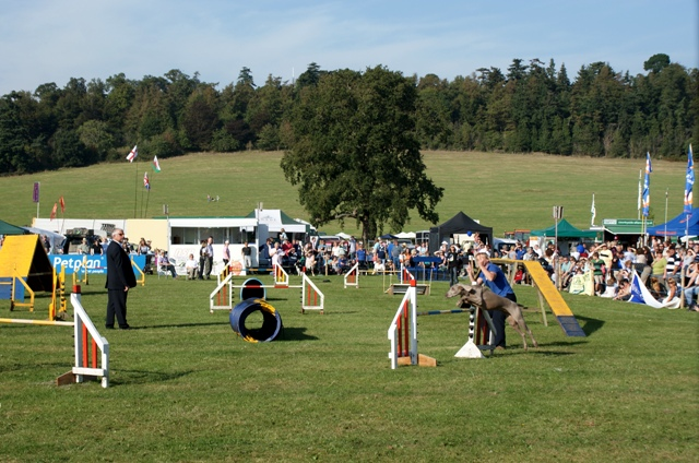 Dog agility competition at Loseley Park