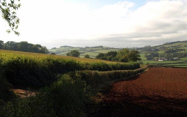 Lane past Milverton Wood