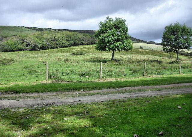 Fields above Tyneham