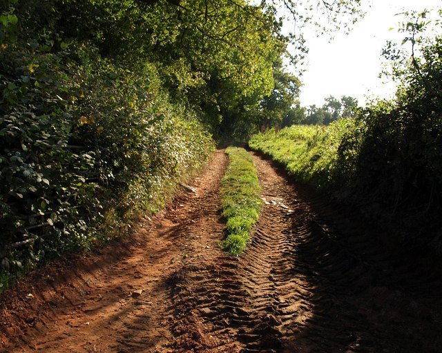 Track beside Milverton Wood