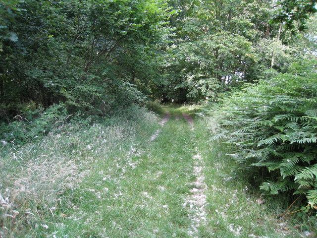 Path through Boathouse Copse