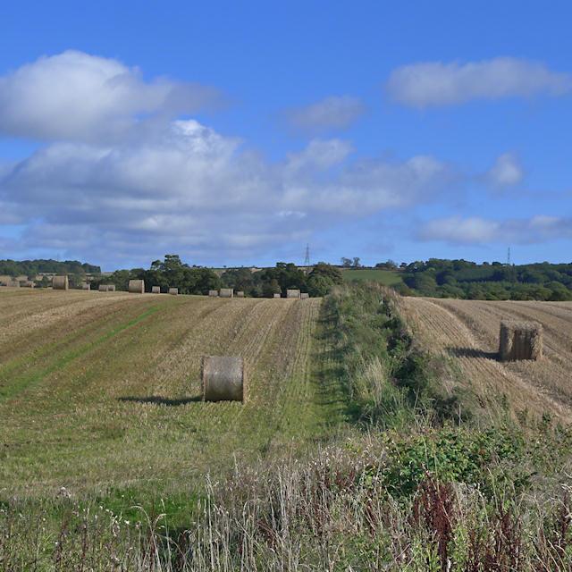 Fields beside the old railway line