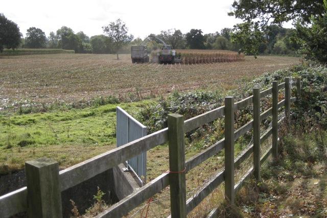Harvesting a tall grass crop