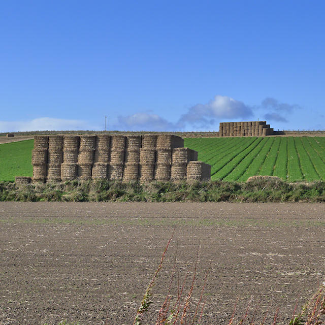 Stacks of straw bales