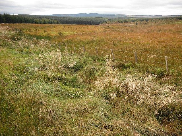 Rough grazing near the Carter Burn